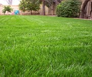 Guide to Selecting the Right Grass for Your Yard